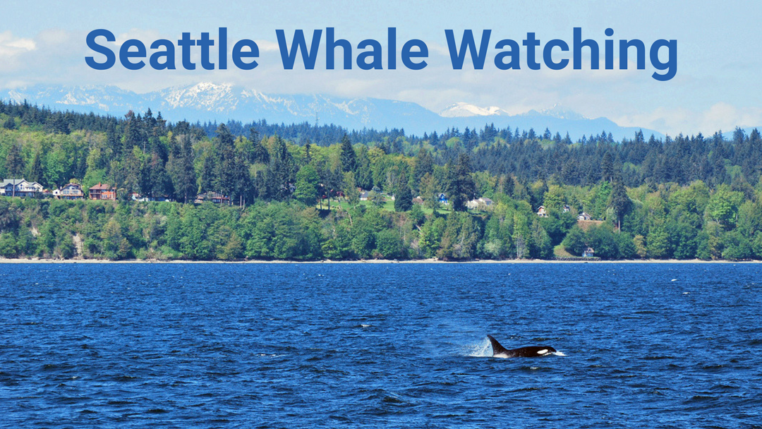 Whale Watching | Seattle Photo Op